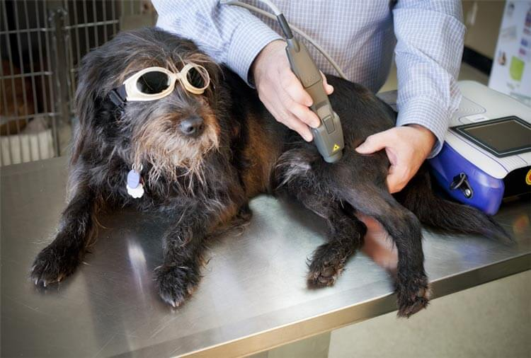 ColdLaserTherapy_Dog