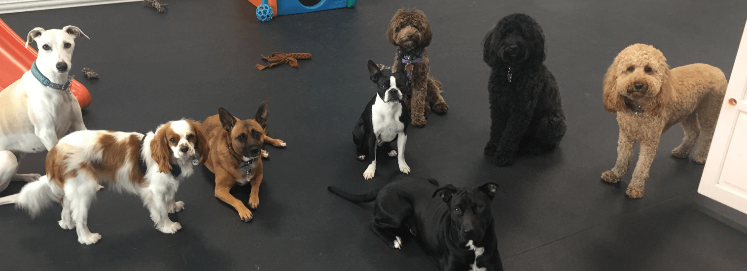 Top Rated Local Veterinarians – The Family Pet Hospital