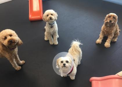 Daycare Services at The Family Pet Hospital